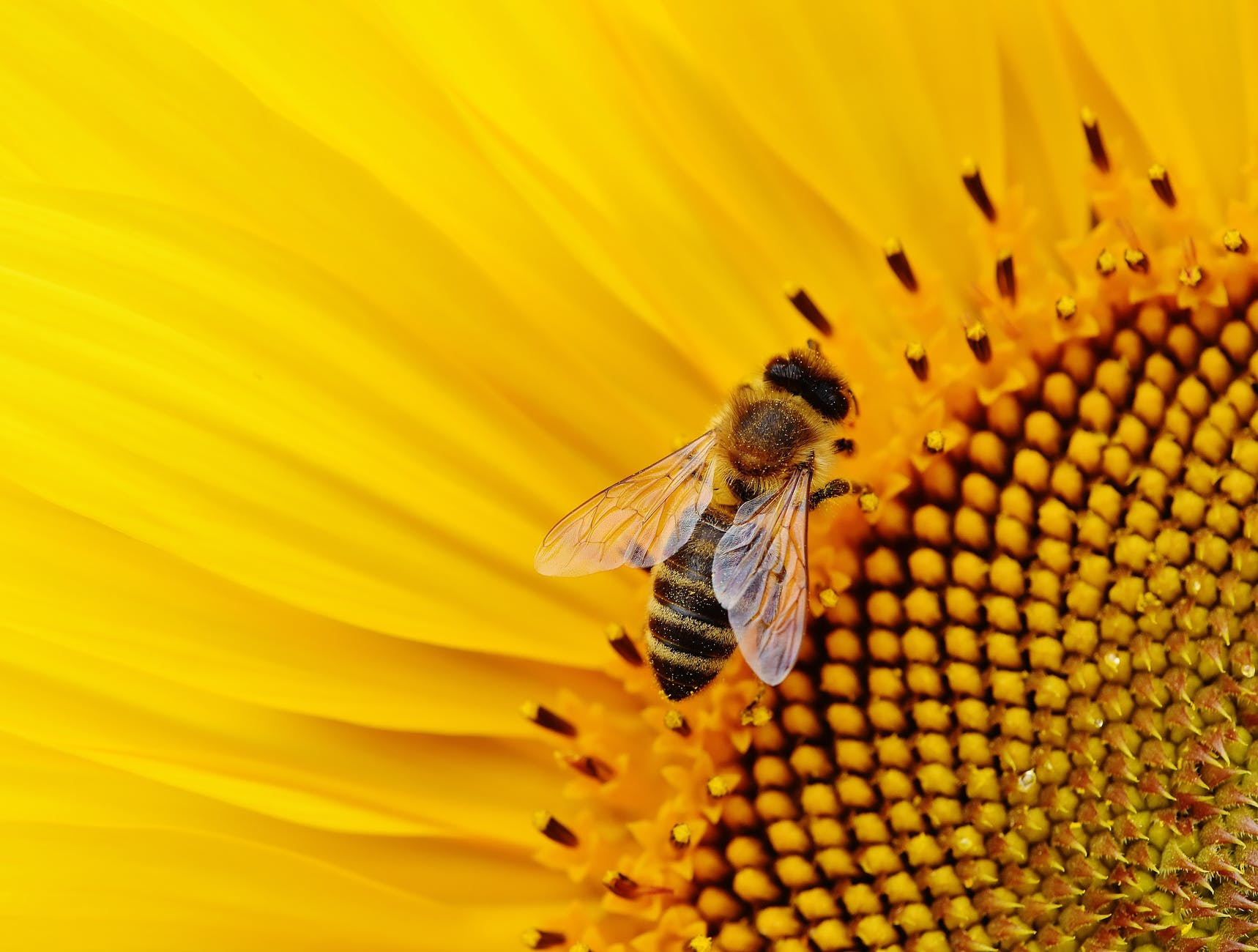 close up photo of bee in flower
