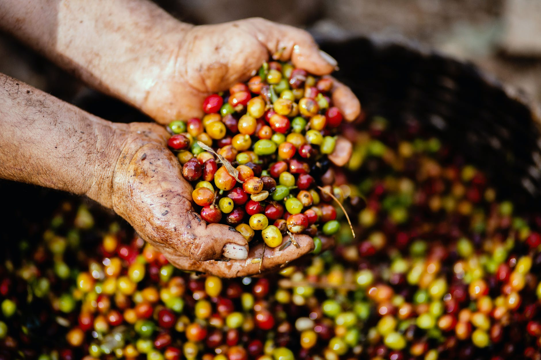 the ethics of coffee
