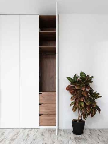 potted codiaeum variegatum plant placed near wardrobe in room